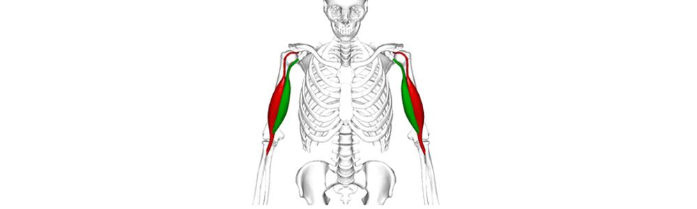 biceps_tendon_disorders